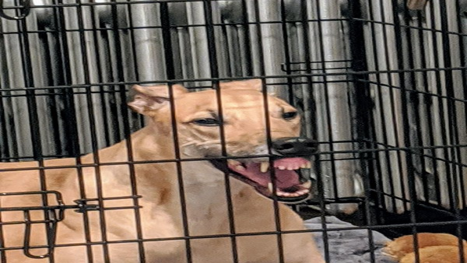 Смешные картинки и фотографии : Смешные собачки, у которых произошел сбой в системе