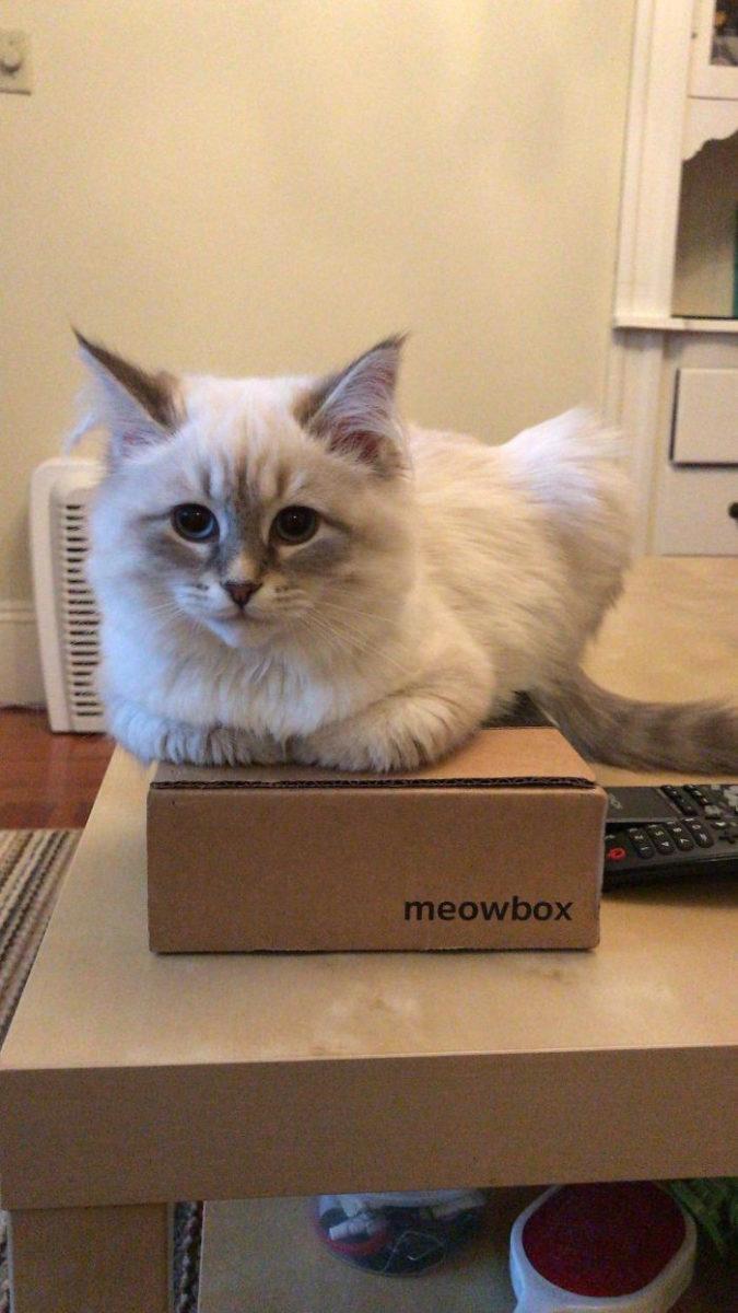 Самое интересное : Котики и их необъяснимая любовь к коробкам