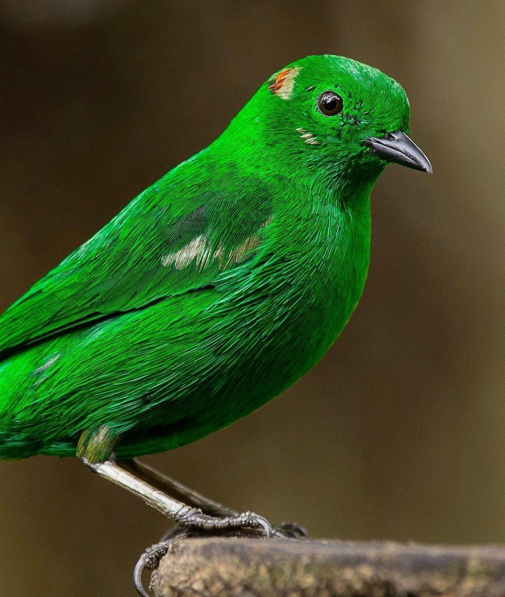Самое интересное : Птицы на фотографиях Шона Грассера