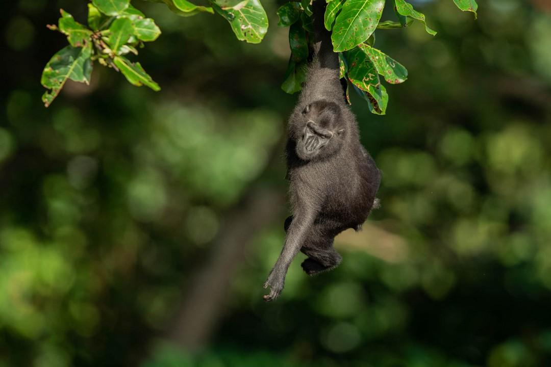 Самое интересное : Птицы и дикие животные на фотографиях Чарльза Райана
