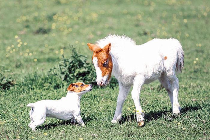 Самое интересное : Животные разных видов, которые похожи друг на друга как близнецы